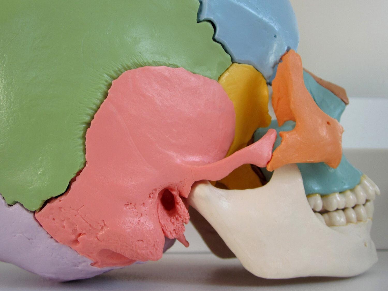 Kiefergelenk Profil